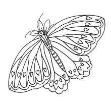Dibujo de una MARIPOSA BONITA - Dibujos para Colorear y Pintar - Dibujos para colorear ANIMALES - Dibujos INSECTOS para colorear - Dibujos para colorear MARIPOSAS - Pintar MARIPOSAS