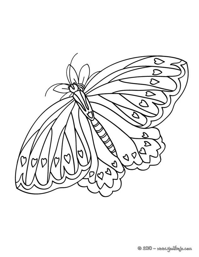 Dibujo para colorear : una MARIPOSA BONITA