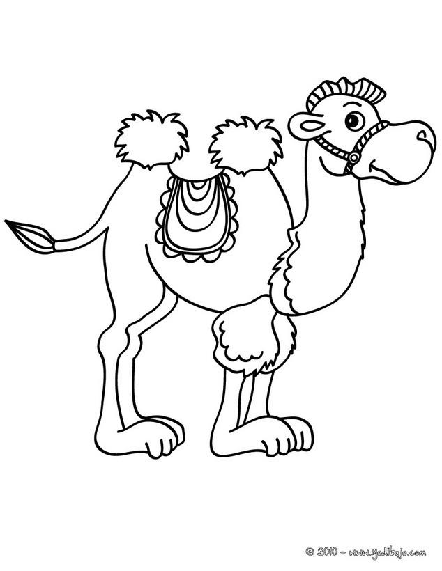 Dibujo para colorear : un camello