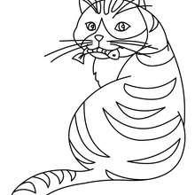 Dibujo para colorear un gato comiendo pescado - Dibujos para Colorear y Pintar - Dibujos para colorear ANIMALES - Dibujos GATOS para colorear - Dibujos para colorear GATO CALLEJERO