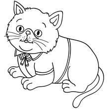 Dibujo para colorear : cachorro gato persa