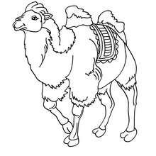 Dibujo para pintar CAMELLO - Dibujos para Colorear y Pintar - Dibujos para colorear ANIMALES - Dibujos ANIMALES SALVAJES para colorear - Dibujos para colorear e imprimir ANIMALES SALVAJES - Colorear CAMELLO