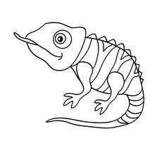 Dibujo para colorear cameleon - Dibujos para Colorear y Pintar - Dibujos para colorear ANIMALES - Dibujos REPTILES para colorear - Colorear dibujos CAMELEON