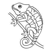Dibujo para pintar cameleon - Dibujos para Colorear y Pintar - Dibujos para colorear ANIMALES - Dibujos REPTILES para colorear - Colorear dibujos CAMELEON