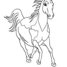 Dibujo para colorear CABALLO CIMARRON - Dibujos para Colorear y Pintar - Dibujos para colorear ANIMALES - Colorear CABALLOS - Dibujos de CABALLOS SALVAJES para colorear