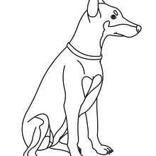 Dibujo para pintar Doberman - Dibujos para Colorear y Pintar - Dibujos para colorear ANIMALES - Dibujos PERROS para colorear - Dibujo para pintar PERRO DOBERMAN