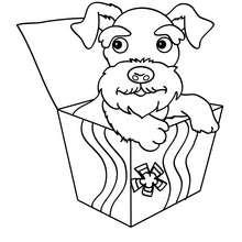 Dibujo cachorro Foxterrier para colorear - Dibujos para Colorear y Pintar - Dibujos para colorear ANIMALES - Dibujos PERROS para colorear - Dibujos para pintar un PERRO FOX TERRIER