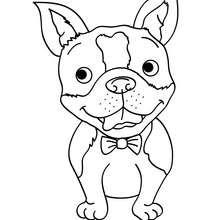 Dibujo para pintar cachorro Bulldog Francés - Dibujos para Colorear y Pintar - Dibujos para colorear ANIMALES - Dibujos PERROS para colorear - Dibujo para pintar PERRO BULLDOG