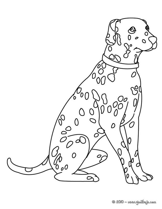 Dibujo para colorear Dalmata - Dibujos para colorear e imprimir PERROS