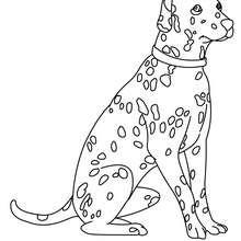 Dibujo para colorear Dalmata - Dibujos para Colorear y Pintar - Dibujos para colorear ANIMALES - Dibujos PERROS para colorear - Dibujos para colorear e imprimir PERROS