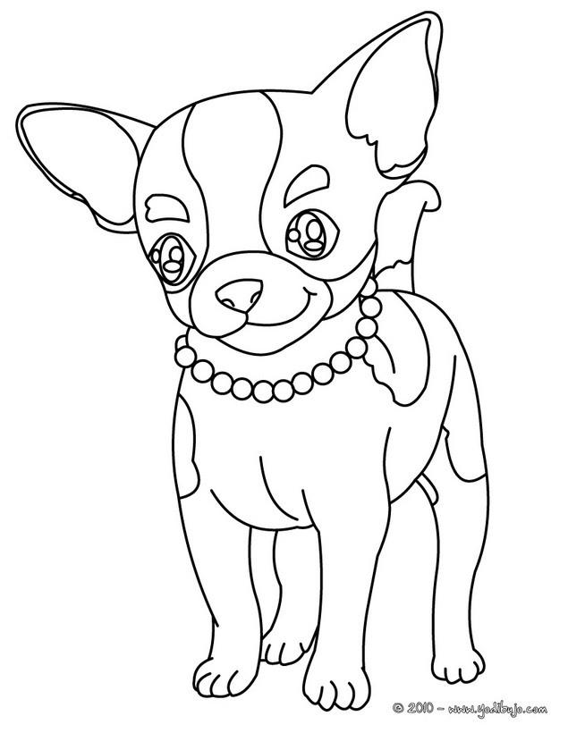 Dibujo para colorear : perro Chihuahua