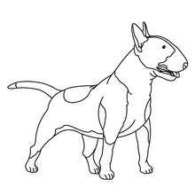 Dibujo para colorear : Bull Terrier