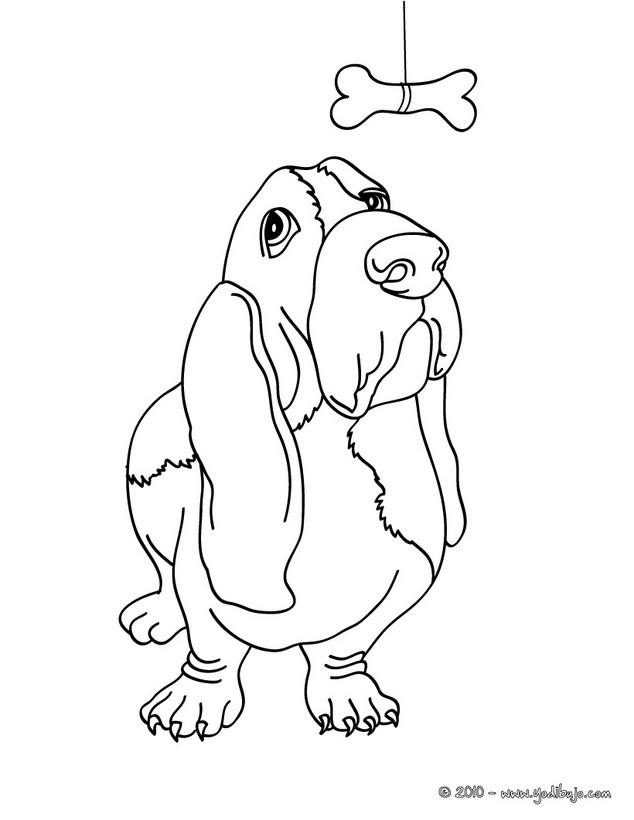 dog basset coloring pages - photo#18