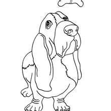 Dibujo para colorear perro Basset - Dibujos para Colorear y Pintar - Dibujos para colorear ANIMALES - Dibujos PERROS para colorear - Dibujos para colorear PERRO BASSET