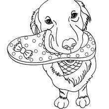 Dibujo para colorear : Labrador