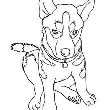 Dibujo para colorear : cachorro Pastor Aleman
