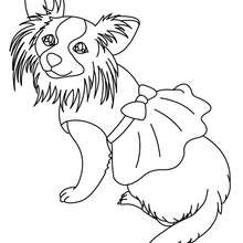 Dibujo para colorear : perro Pekines