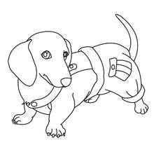 Dibujo para colorear : perro salsicha