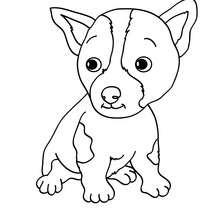 Dibujo para colorear : cachorro Pitbull