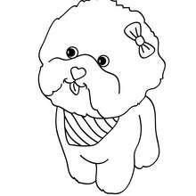 Dibujo para pintar cachorro Caniche - Dibujos para Colorear y Pintar - Dibujos para colorear ANIMALES - Dibujos PERROS para colorear - Dibujos para colorear CACHORROS