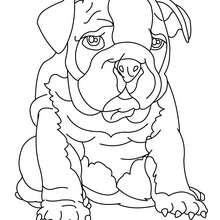 Dibujo para colorear cachorro Sharpei - Dibujos para Colorear y Pintar - Dibujos para colorear ANIMALES - Dibujos PERROS para colorear - Dibujos para colorear CACHORROS