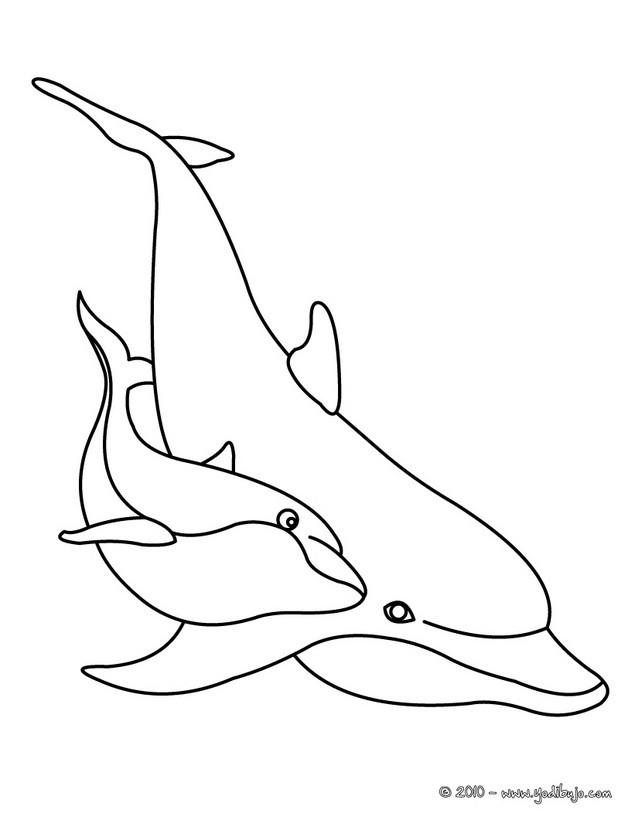 Dibujos para colorear un delfin con su bebe - es.hellokids.com