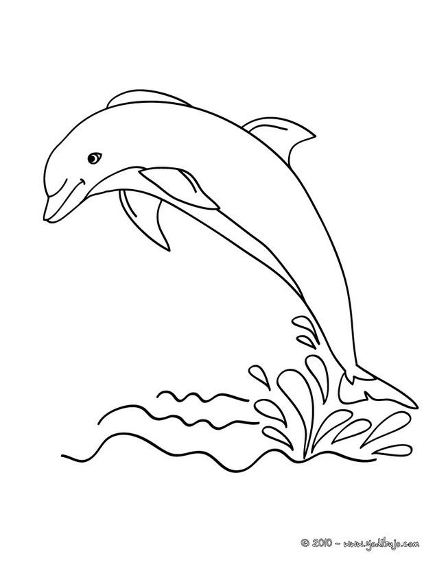 Dibujo para colorear un delfin saltando - Colorear DELFINES