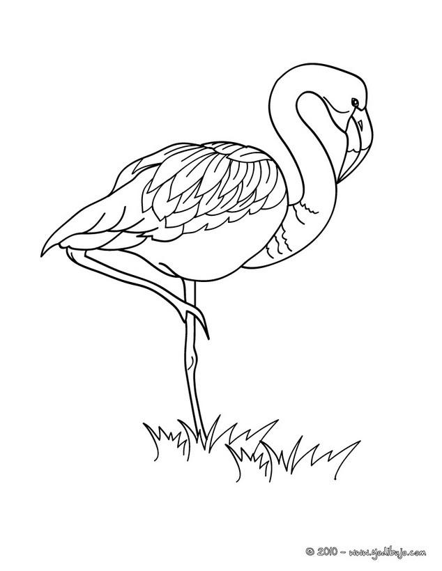 Dibujo para colorear : un flamingo