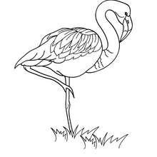 Dibujo para pintar un flamingo - Dibujos para Colorear y Pintar - Dibujos para colorear ANIMALES - Dibujos AVES para colorear - Dibujos para colorear FLAMINGO