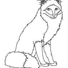 Dibujo para colorear : zorro