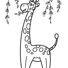 Dibujo para pintar JIRAFA - Dibujos para Colorear y Pintar - Dibujos para colorear ANIMALES - Dibujos ANIMALES SALVAJES para colorear - Dibujos ANIMALES DE LA SABANA para colorear - Colorear JIRAFA