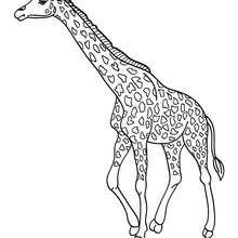 Dibujo para pintar una jirafa - Dibujos para Colorear y Pintar - Dibujos para colorear ANIMALES - Dibujos ANIMALES SALVAJES para colorear - Dibujos ANIMALES DE LA SABANA para colorear - Colorear JIRAFA
