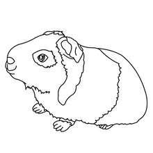 Dibujo para colorear COBAYAS - Dibujos para Colorear y Pintar - Dibujos para colorear ANIMALES - Dibujos MASCOTAS para colorear - Dibujos HAMSTER para colorear