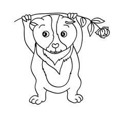 Dibujo para pintar COBAYAS - Dibujos para Colorear y Pintar - Dibujos para colorear ANIMALES - Dibujos MASCOTAS para colorear - Dibujos HAMSTER para colorear