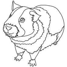 Dibujo para pintar CONEJILLO DE INDIAS - Dibujos para Colorear y Pintar - Dibujos para colorear ANIMALES - Dibujos MASCOTAS para colorear - Dibujos HAMSTER para colorear