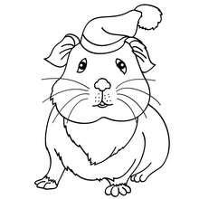 Dibujo HAMSTER para colorear - Dibujos para Colorear y Pintar - Dibujos para colorear ANIMALES - Dibujos MASCOTAS para colorear - Dibujos HAMSTER para colorear
