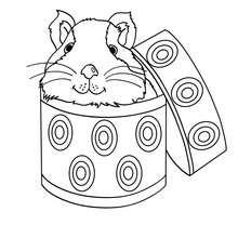 Dibujo HAMSTER PARA PINTAR - Dibujos para Colorear y Pintar - Dibujos para colorear ANIMALES - Dibujos MASCOTAS para colorear - Dibujos HAMSTER para colorear