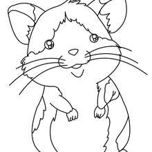 Dibujo para colorear RATON GERBI - Dibujos para Colorear y Pintar - Dibujos para colorear ANIMALES - Dibujos MASCOTAS para colorear - Dibujos RATON para colorear