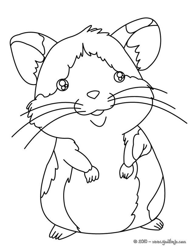 Dibujos Mascotas Para Colorear 15 Dibujos De Animales Para