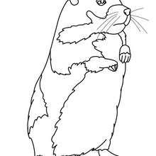 Dibujo COBAYA para colorear - Dibujos para Colorear y Pintar - Dibujos para colorear ANIMALES - Dibujos MASCOTAS para colorear - Dibujos HAMSTER para colorear