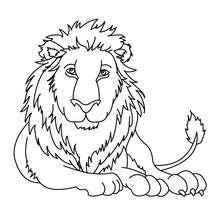 Dibujo LEON para pintar - Dibujos para Colorear y Pintar - Dibujos para colorear ANIMALES - Dibujos ANIMALES SALVAJES para colorear - Dibujos ANIMALES DE LA SABANA para colorear - Colorear LEON