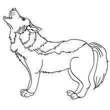 Dibujo para pintar LOBO - Dibujos para Colorear y Pintar - Dibujos para colorear ANIMALES - Dibujos ANIMALES SALVAJES para colorear - Dibujos ANIMALES DE LA SELVA para colorear - Colorear LOBO