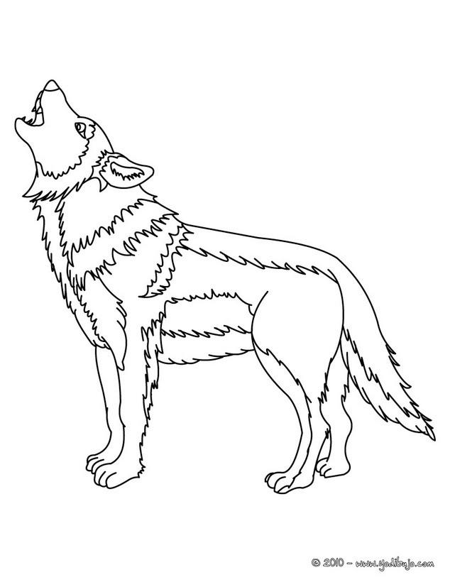 Dibujos para colorear lobo gris - es.hellokids.com