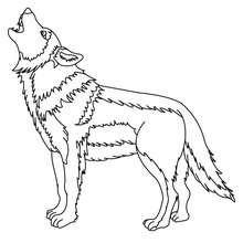 Dibujo para pintar LOBO GRIS - Dibujos para Colorear y Pintar - Dibujos para colorear ANIMALES - Dibujos ANIMALES SALVAJES para colorear - Dibujos ANIMALES DE LA SELVA para colorear - Colorear LOBO