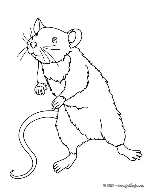 Dibujos para colorear rata - es.hellokids.com