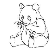 Dibujo para colorear : Oso Panda em el bosque
