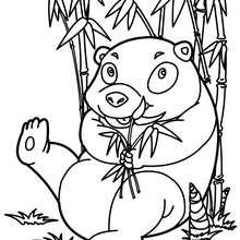 Dibujo para colorear : Oso Panda come Bambú