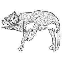 Dibujo para colorear LEOPARDO - Dibujos para Colorear y Pintar - Dibujos para colorear ANIMALES - Dibujos ANIMALES SALVAJES para colorear - Dibujos ANIMALES DE LA JUNGLA para colorear - Colorear LEOPARDO
