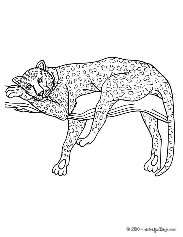 Dibujos ANIMALES DE LA JUNGLA para colorear, LEOPARDO para imprimir