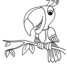 Dibujo para colorear tucan - Dibujos para Colorear y Pintar - Dibujos para colorear ANIMALES - Dibujos AVES para colorear - Colorear TUCAN